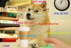 studentdoge